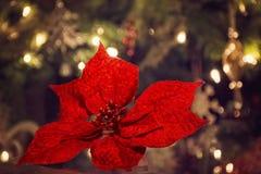 Εορταστικές διακοσμήσεις Χριστουγέννων με τα λουλούδια Στοκ Φωτογραφία