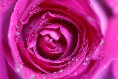 Εορταστική ανθοδέσμη των πορφυρών τριαντάφυλλων Στοκ Φωτογραφίες