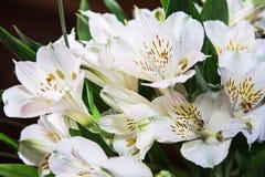 Εορταστική ανθοδέσμη των όμορφων άσπρων hibiscus λουλουδιών, γαμήλια ανθοδέσμη Στοκ φωτογραφία με δικαίωμα ελεύθερης χρήσης