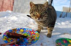 Εορταστική γάτα διάθεσης Στοκ εικόνες με δικαίωμα ελεύθερης χρήσης