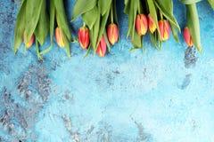 Εορταστική ρύθμιση για Πάσχα με τις όμορφες τουλίπες στο μπλε backgro Στοκ Εικόνες