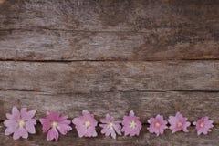 Εορταστικό πλαίσιο λουλουδιών των ρόδινων mallow λουλουδιών Στοκ εικόνες με δικαίωμα ελεύθερης χρήσης