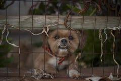 Εορταστικό σκυλί Στοκ Φωτογραφίες