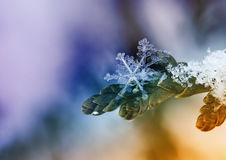 Εορταστικό υπόβαθρο Χριστουγέννων με όμορφα snowflakes σε έναν κλάδο Στοκ εικόνες με δικαίωμα ελεύθερης χρήσης