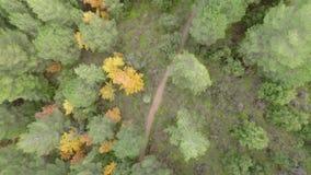 επάνω από τα δέντρα απόθεμα βίντεο