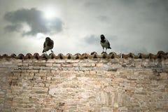 επάνω από τα κεραμίδια κοράκων Στοκ εικόνες με δικαίωμα ελεύθερης χρήσης