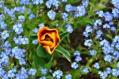 επάνω από τα λουλούδια Στοκ Εικόνες