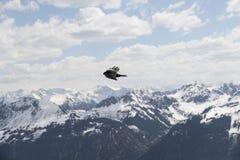 επάνω από τα σκοτεινά πετώντας ωκεάνια ανοικτά seagull πουλιών φτερά Στοκ εικόνες με δικαίωμα ελεύθερης χρήσης