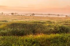επάνω από τα όμορφα σύννεφα πουλιών τα χρώματα πετούν νωρίς το χρυσό πρωινού SOM θάλασσας ανόδων αντανάκλασης φύσης ευχάριστο ήρε Στοκ εικόνα με δικαίωμα ελεύθερης χρήσης