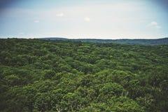Επάνω από τη γραμμή δέντρων στοκ εικόνα