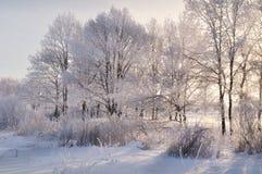 επάνω από το δασικό βλασταημένο τοπίο χειμώνα δέντρων χιονιού Στοκ Εικόνες
