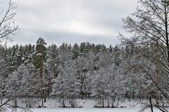 επάνω από το δασικό βλασταημένο τοπίο χειμώνα δέντρων χιονιού Στοκ εικόνα με δικαίωμα ελεύθερης χρήσης