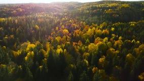 Επάνω από το δάσος στην πτώση απόθεμα βίντεο