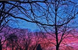 επάνω από το φωτεινό χειμώνα ανώτατων δέντρων ηλιοβασιλέματος ήλιων γουνών κόκκινο Στοκ Εικόνες