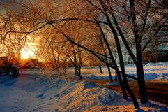 επάνω από το φωτεινό χειμώνα ανώτατων δέντρων ηλιοβασιλέματος ήλιων γουνών κόκκινο Στοκ εικόνες με δικαίωμα ελεύθερης χρήσης