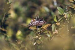 Επάνω από cicada θάμνων Στοκ φωτογραφία με δικαίωμα ελεύθερης χρήσης