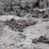 Επάνω στα στενά μυρμήγκια Στοκ Φωτογραφία