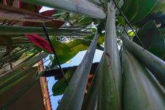 Επάνω στην άποψη από το έδαφος των πράσινων και κόκκινων εξωτικών τροπικών εγκαταστάσεων στοκ φωτογραφίες με δικαίωμα ελεύθερης χρήσης