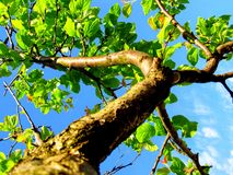 Επάνω στο δέντρο Στοκ φωτογραφίες με δικαίωμα ελεύθερης χρήσης