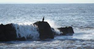 επάνω στο βράχο Στοκ Εικόνες