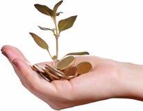 επένδυση ανάπτυξης οικονομίας έννοιας Στοκ φωτογραφία με δικαίωμα ελεύθερης χρήσης