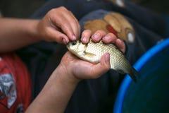 Επίασε ένα μικρό ψάρι στους φοίνικες παιδιών ` s στοκ φωτογραφίες