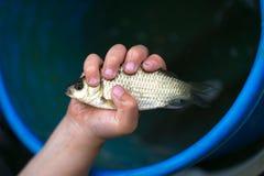 Επίασε ένα μικρό ψάρι στους φοίνικες παιδιών ` s στοκ φωτογραφία με δικαίωμα ελεύθερης χρήσης