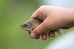 Επίασε ένα μικρό ψάρι στους φοίνικες παιδιών ` s στοκ φωτογραφία