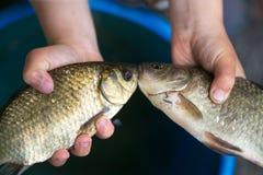 Επίασε ένα μικρό ψάρι στους φοίνικες παιδιών ` s στοκ εικόνα