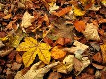 επίγεια φύλλα φθινοπώρο&upsil Στοκ εικόνα με δικαίωμα ελεύθερης χρήσης