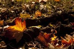 επίγεια φύλλα Στοκ εικόνες με δικαίωμα ελεύθερης χρήσης