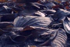 επίγεια φύλλα Στοκ εικόνα με δικαίωμα ελεύθερης χρήσης