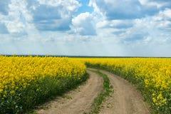 Επίγειος δρόμος στον κίτρινο τομέα λουλουδιών, όμορφο τοπίο άνοιξη, φωτεινή ηλιόλουστη ημέρα, συναπόσπορος Στοκ Εικόνες