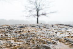 Επίγειο επίπεδο που βλασταίνεται υγρό flagstone με το δέντρο στο υπόβαθρο στοκ φωτογραφία με δικαίωμα ελεύθερης χρήσης