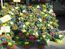 Επίδειξη λουλουδιών στην υπαίθρια αγορά στην Ιταλία Στοκ Εικόνες
