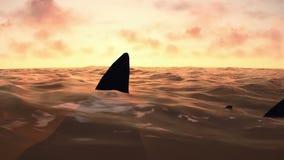 Επίθεση καρχαριών στη μέση του ωκεάνιου μήκους σε πόδηα απόθεμα βίντεο