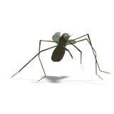 επίκληση mantis απεικόνιση αποθεμάτων