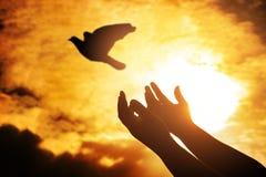 Επίκληση ατόμων και ελεύθερο πουλί που απολαμβάνουν τη φύση στο ηλιοβασίλεμα, ανθρώπινο raisi Στοκ Φωτογραφία