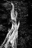 Επίκληση Deadwood Στοκ φωτογραφίες με δικαίωμα ελεύθερης χρήσης
