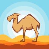 Επίπεδη απεικόνιση ύφους της καμήλας Αγαθό για το λογότυπο Στοκ φωτογραφίες με δικαίωμα ελεύθερης χρήσης