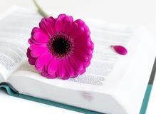 Επίπεδος βάλτε: ανοικτή Βίβλος, βιβλίο, ανοικτό περιοδικό και ρόδινος, πορφυρός, violette, κόκκινο λουλούδι Gerbera με τα πέταλα στοκ εικόνες