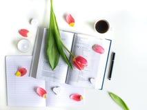 Επίπεδος βάλτε: Κόκκινη τουλίπα, κόκκινα πέταλα και μια Βίβλος σε έναν άσπρο πίνακα στοκ φωτογραφία με δικαίωμα ελεύθερης χρήσης
