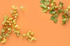 Επίπεδος βάλτε τη ζωηρόχρωμη φθινοπώρου τοπ άποψη πτώσης φθινοπώρου υποβάθρου φύλλων πορτοκαλιά στοκ εικόνες με δικαίωμα ελεύθερης χρήσης