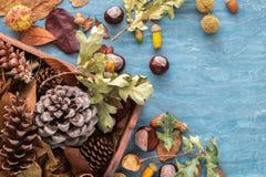 Επίπεδος βάλτε τη σύνθεση για τις ευχετήριες κάρτες διακοπών φθινοπώρου Κώνοι πεύκων, δρύινοι κλάδοι, βελανίδια, φύλλα, κάστανα σ Στοκ φωτογραφία με δικαίωμα ελεύθερης χρήσης