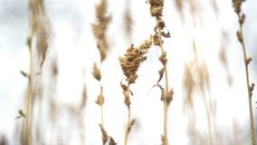 Επίπεδος βάλτε τη χειροποίητη καρύδα γύρω από τις καραμέλες πράσινος και ρόδινος αυξήθηκε ροδοειδές υπόβαθρο με στις 14 Φεβρουαρί φιλμ μικρού μήκους