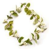 Επίπεδος βάλτε το πλαίσιο συνόρων με τα άσπρα jasmine λουλούδια, οφθαλμοί στοκ φωτογραφία
