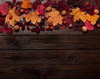 Επίπεδος βάλτε το πλαίσιο των πορφυρών και κίτρινων φύλλων φθινοπώρου, φουντούκια, W Στοκ Εικόνα