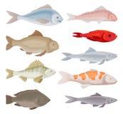 Επίπεδο διανυσματικό σύνολο διαφορετικών ειδών ψαριών Ενυδρείο και θαλάσσια ζώα με τα πτερύγια Πλάσματα θάλασσας διανυσματική απεικόνιση