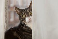 Επίπεδη γάτα Στοκ Φωτογραφίες
