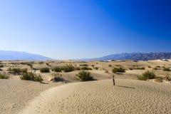 Επίπεδοι αμμόλοφοι άμμου Mesquite, κοντά στην κοιλάδα NP θανάτου φρεατίων Stovepipe στοκ εικόνες